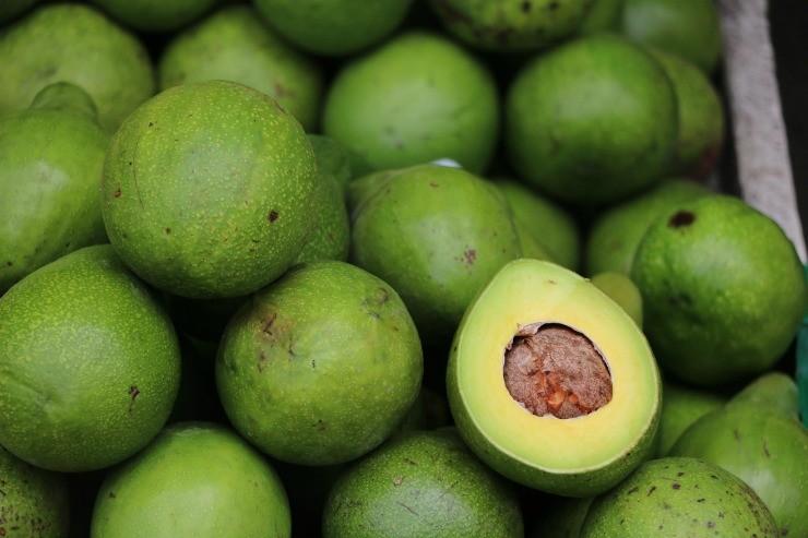 урожай авокадо