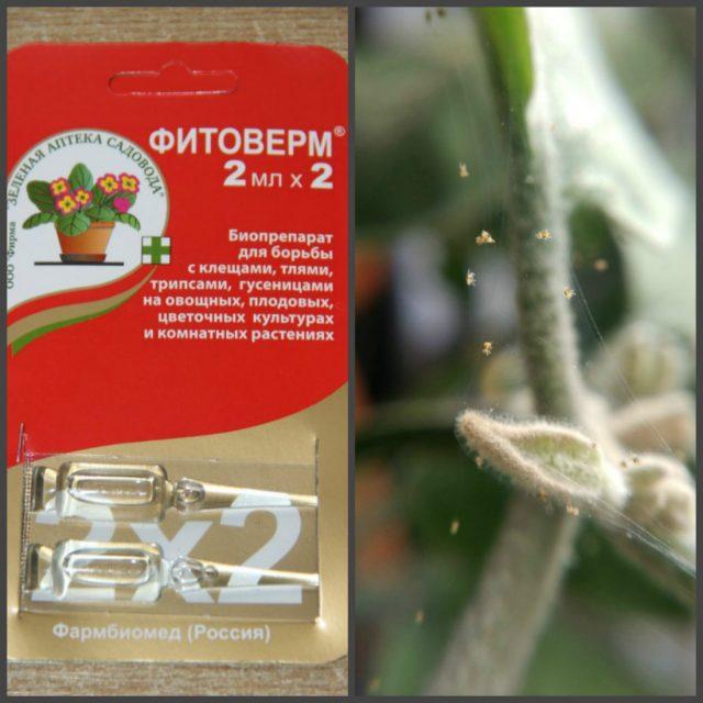 иструкция по применению фитоверм от вредителей домашних растений