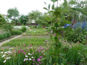 сад и огород в июне