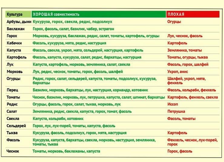 таблица совместных посадок овощей