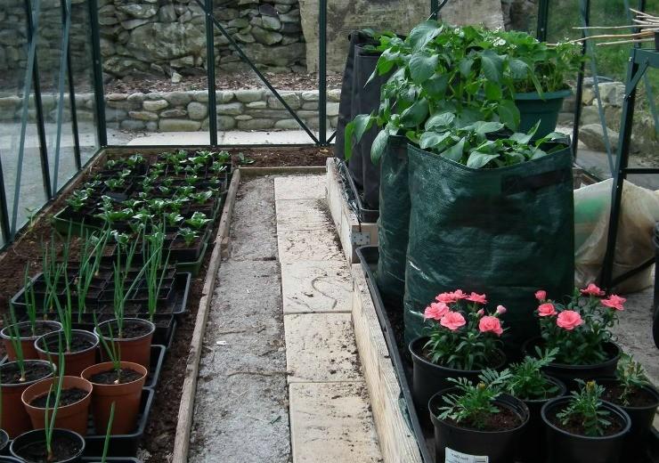 выращивание растений в контейнерах в теплице