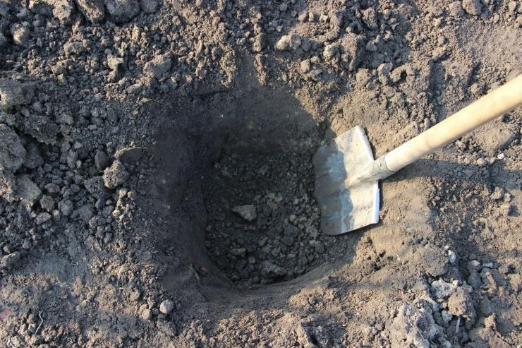 яма для посадки смородины