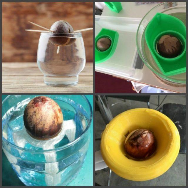 способы проращивания авокадо в воде