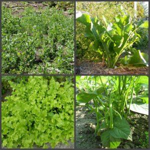 овощи для бедной почвы