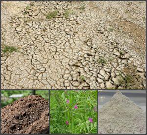 щелочная почва на участке
