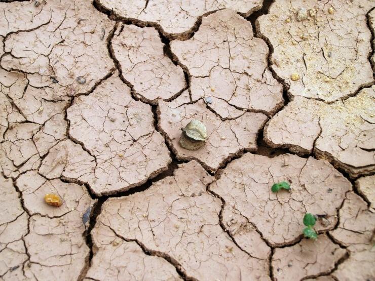 щелочная почва растрескалась