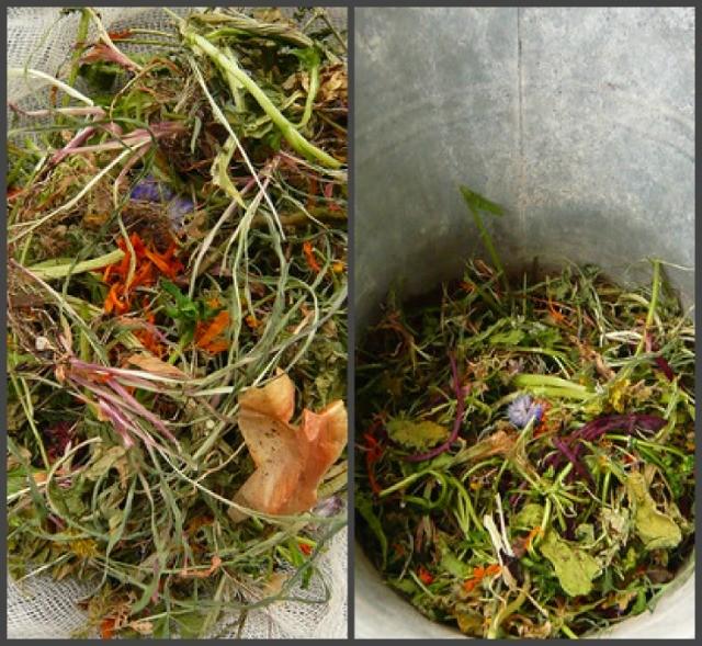 приготовление травяного настоя для подкормки свёклы