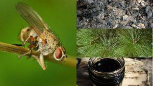 народные средства борьбы с луковой мухой