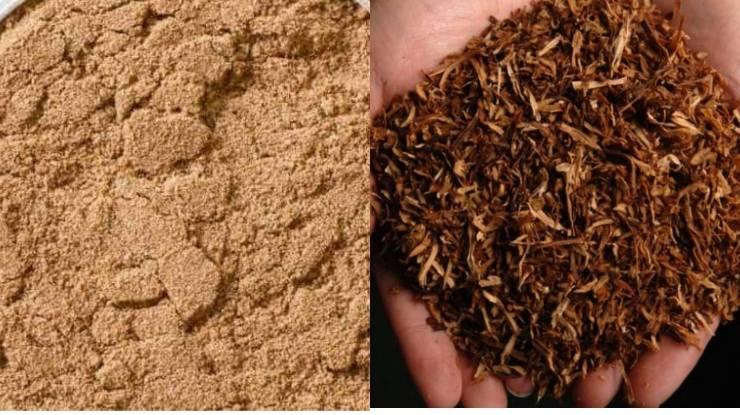 табачная пыль от луковой мухи