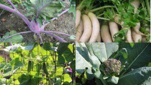 что посадить в июле из овощей