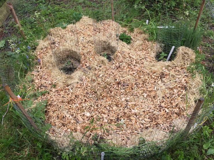 мульчирование опилками в огороде